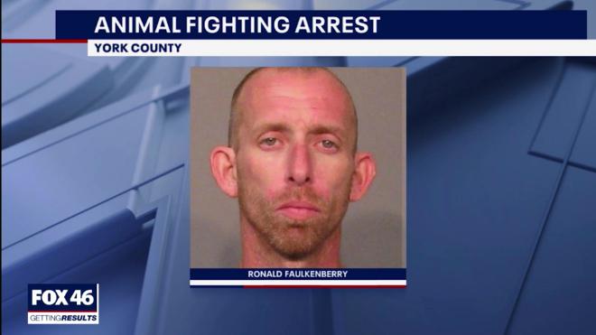 Screenshot_2020-01-21 Arrest made after York CO pit bull attacks senior, dog fight ring blamed.png